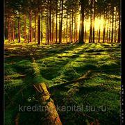 Продам лесоучасток под вырубку фото