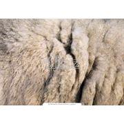 Жилет из овчины фото