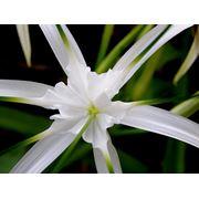 Цветы экзотические фото