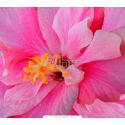 Подарки и сувениры. Цветы флористика. Цветы срезанные. Цветы экзотические. фото