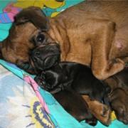 Собаки и щенки фото