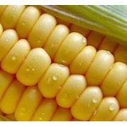 Продукты и напитки. Специи приправы добавки другое продовольствие. Крахмал. Крахмал кукурузный. фото