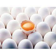 Яйца цесарки инкубационные фото