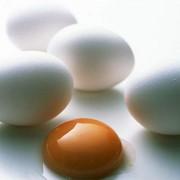 Яйца куриные опт фото