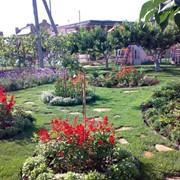 Мобильный садовник. Услуги по уходу за садом и газоном. фото