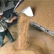 Экспорт зерновых, экспорт зерновых заказать Запорожье фото