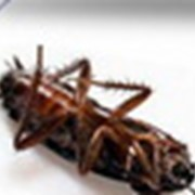 Средство от тараканов Украина. Николаев. фотография