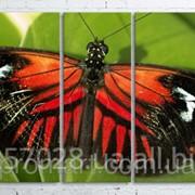 Модульна картина на полотні Метелик код КМ100200(200)-003 фото