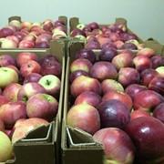 Яблоки РБ фото