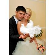 Торжественное бракосочетание фото