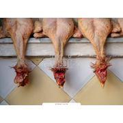 Полутушка «Райская» к/в из мяса птицы фото