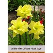 Лилейник Double River Wye фото
