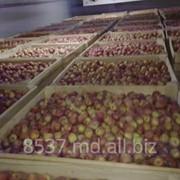 Продаем яблоки фото