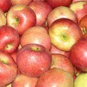 Яблоки свежие оптом фото