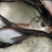 Рыба мороженая подлещ фото
