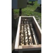 Бджолопакети карпатських бджіл доставка від 1 шт. фото