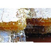 Мед пчелиный натуральный фото