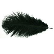 Перья страуса (страусиное перо) фото