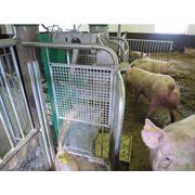 Автоматическая система раздачи корма FitmixСистемы кормления свиней фото