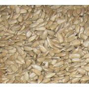 Ядро семян подсолнечника сырое фото