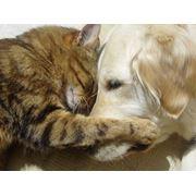 """Ветеринарный кабинет """"Бетховен"""" фото"""