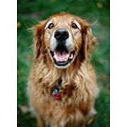 Стоматология ветеринарная фото