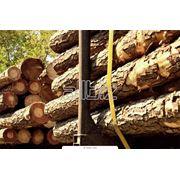 Древесное сырье древесина фото