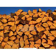 Дрова из различных пород деревьев фото