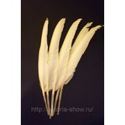 Перья гуся, белый фото