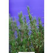 Препараты из екарственных растений фото