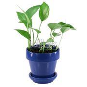 Комнатные растения декоративнолиственные фото