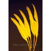 Перья гуся, желтые фото