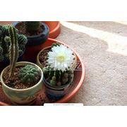 Цветы комнатные в ассортименте фото
