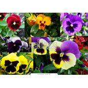 Семена декоративных растений фото