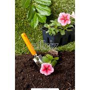 Рассада декоративных растений фото