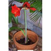 Горшечные растения в ассортименте фото