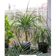 Комнатные пальмовые растения в ассортименте фото