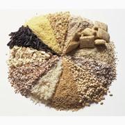 Крупы из пророщенной пшеницы фото