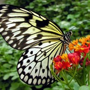 Бабочки живые фото