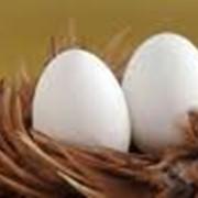 Яйцо куриное Д1 фото