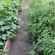 Посадка овощных и полодово ягодных культур новым методом,позволяющим сократить время по уходу за растениями в пять раз фото