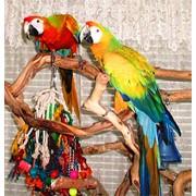 Гибриды попугаев ара - птенцы выкормыши 4 мес из питомников Европы фото