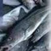 Рыболовство в океане и внутренних морских водах фото