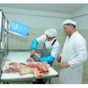 Обвалка и жиловка мяса по европейской технологии фото