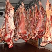 Услуги по замораживанию мяса и мясных продуктов фото