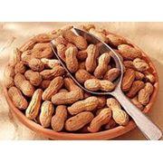 земляные орехи фото