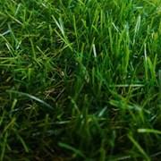 Искусственная трава арт. 35 GRASS ТР фото