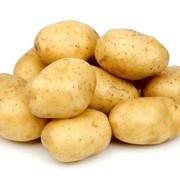 Картофель 95$ за тонну фото