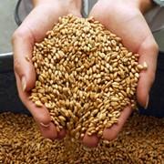 Переработка зерновых на крупы и муку торговозакупочная фото