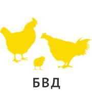 БВД КМ КН-15% для кур-несушек возрастом 23-47 недель Элит фото